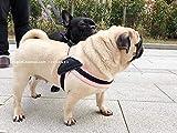 L Pet supplies Correas para Perros Correas para el Pecho Bulldogs ingleses Cuerdas para Perros Chalecos para Mascotas Cinturones de tracción para el hogar Chalecos para césped √