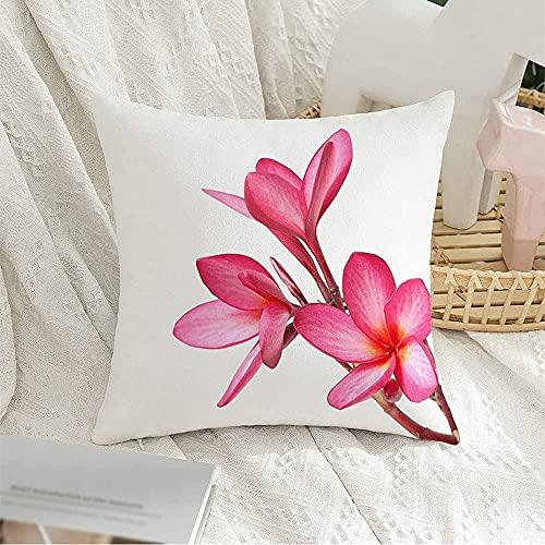Funda de Almohada Decorativa Cuadrada con diseño de Flores de Frangipani Beauty, Que invitan a pétalos aislados sobre Blanco, Objetos de la Naturaleza, Elemento de Bali, Funda de Almohada para Decora
