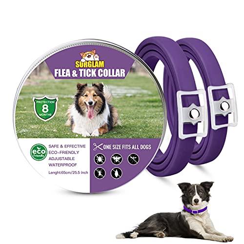 Collare Antipulci e Zecche per Cani, Collare Regolabile Impermeabile, 8 Mesi di Protezione, Soluzione Naturale Contro i parassiti per Cani, Taglia Unica per Tutti (Lila-2 pz)
