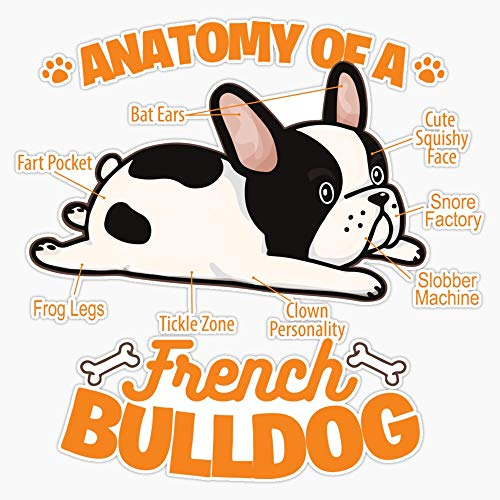 Anatomy Of A French Bulldog Funny Pet Frenchie Dog Sticker Vinyl Waterproof Sticker Decal Car Laptop Wall Window Bumper Sticker 5'