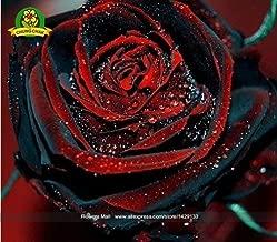 ChinaMarket 200PCS True Blood Black Rose Rare Beautiful Rose Seed Exotic Plant Home Garden