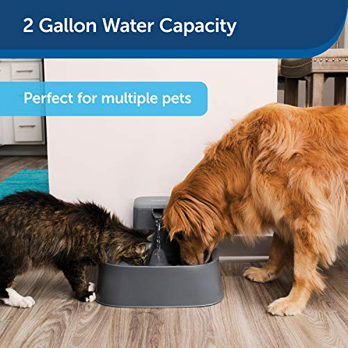 PetSafe Drinkwell 2 Gallon Dog and Cat Water Fountain, Best for Large Dog Breeds and Multiple Pet Households, Easy-to-Clean Design, Filters Included