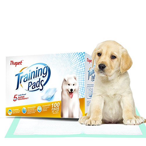How to Train Puppies on Puppy Pad Training