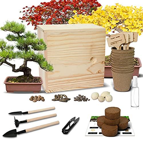 Hand-Mart 4 Bonsai Tree Seeds with Planter Box Starter Kit, Sakura Ginkgo Pine Flame Tree, Including Everything-Soil, Pots, 3 Garden-Tool, Pruner, Sprayer, Plant Labels, Wood Box-DIY Craft