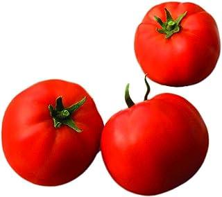 Park Seed Big Yummy Hybrid Tomato Seeds