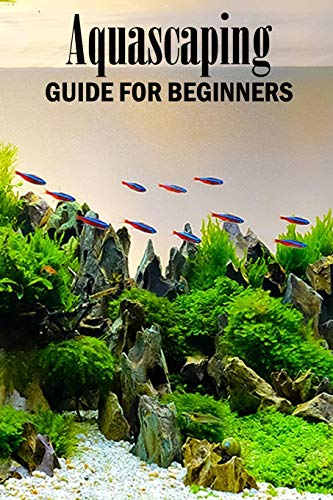 Aquascaping Guide for Beginners: Gift Ideas for Christmas