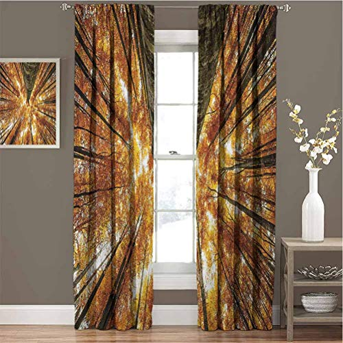 Forest All Season Insulation Big High Beech Trees Deciduous Shedding Canadian Maples America Inspired Idyllic Noise Reduction Curtain Panel Living Room W72 x L72 Inch Orange Brown