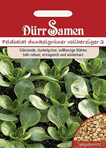 Feldsalat dunkelgrün vollherzig 2
