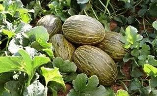 Seeds Piel De Sapo Melon Seed Santa Claus Toadskin Melon Extremely Sweet Rare #EL01YN (100 Seeds)