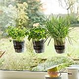 Trio de plantes aromatiques «Basilic» pour fenêtre de cuisineÉtiquette et craie - Fresh Herbs Trio - Jardin - Herbes Jardin - Décoration de fenêtre - Cadeau - Ø 13cm - Hauteur: 16cm.