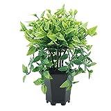 THj Planta Artificial, Herradura, Sauce llorón, bonsái, simulación, Planta Artificial en Maceta, Adorno para el hogar, decoración Verde