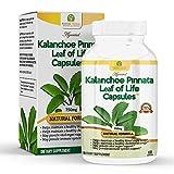 Kalanchoe Pinnata-Leaf of Life (Bryophyllum Pinnatum) Capsulas. 1 bottle (1 Month Supply) Antioxidantes de Kalanchoe Pinnata-Siempreviva (Bryophyllum Pinnatum). Antioxidantes Potentes 750mg