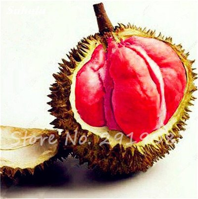 10 Pcs Durian Seeds délicieux roi de fruits sains Tropical Giant Trees Jardin Plantes Bonsaï Non-GMO Haute Nutrition 24