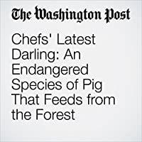 Chefs' Latest Darling: An Endangered Species of Pig That Feeds from the Forest's image