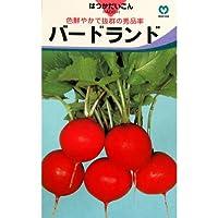 廿日大根 種 【バードランド】 小袋(約5ml)