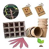 KULTIVERI Set de Cultivo de Lechugas y Tomates de 21 Piezas: Macetas y Semilleros de Germinación Biodegradables. CREA tu Propio Huerto en Casa.