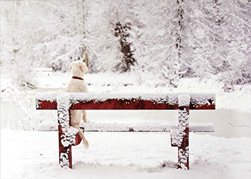 Dog on Snowy Bench Deluxe Boxed Holiday Cards (Christmas Cards, Greeting Cards)