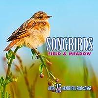 Songbirds: Field & Meadow
