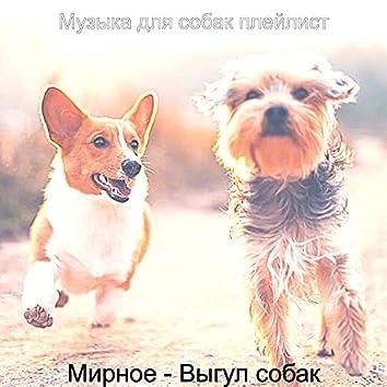Мирное - Выгул собак