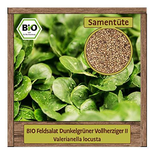 BIO Feldsalat Samen Sorte Dunkelgrüner Vollherziger II (Valerianella locusta) Gemüsesamen Feldsalat Saatgut