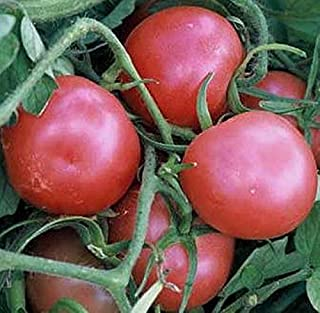 Ping Pong Pink Tomato Seed