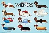 YISUMEI 40' x 50' Blanket Comfort Warmth Soft Plush Throw for CouchWonderful Wieners Animal Humor
