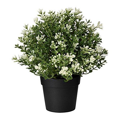 IKEA/イケア FEJKA:人工観葉植物22 cm タイム(403.751.67)の写真