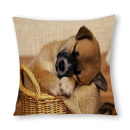 Perfecone Home Improvement - Funda de almohada de algodón para cama doble, diseño de cachorro durmiendo en una cesta de mimbre, sofá y coche, 1 paquete de 60 cm x 60 cm