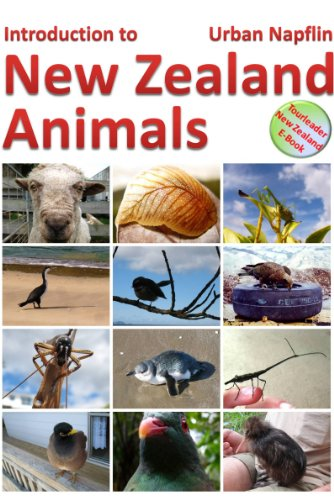 Introduction to New Zealand animals: A short introduction to the unique wildlife of New Zealand (English Edition)