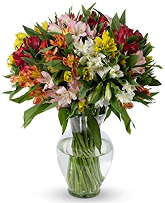 Benchmark Bouquets Assorted Peruvian Lilies, With Vase (Fresh Cut Flowers) by Benchmark Bouquets