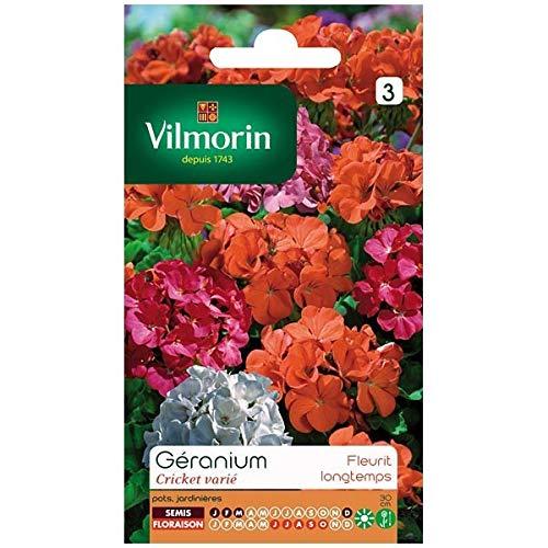 Vilmorin - Sachet graines Géranium Cricket Varié
