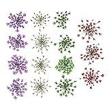Homyl 15 Stück Natürliche Getrocknete Blumen gepresst Herbarium Dekorative Bastelarbeiten Nail...