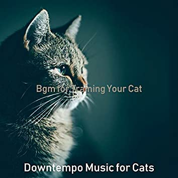 Bgm for Training Your Cat