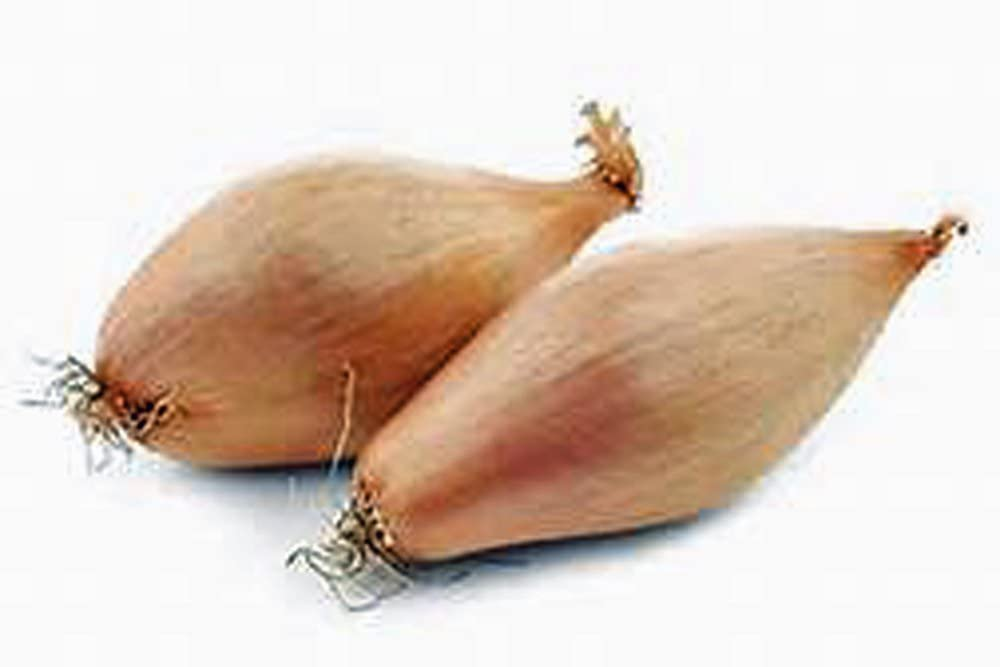 Shallots Yellow Dutch 4 Pounds Small Harvested and Freshly T High material security