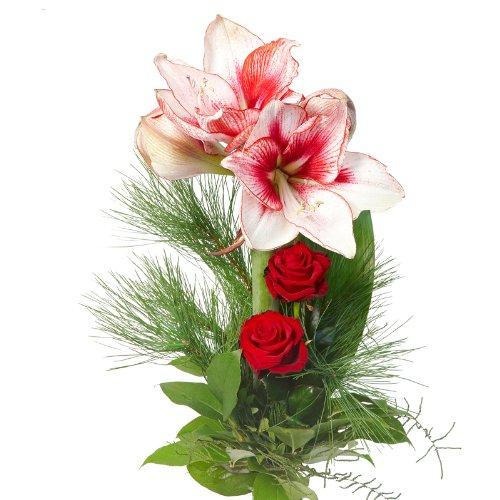 Blumenversand - Blumenstrauß im Advent und Weihnachtszeit - mit rot-weißer Amaryllis und roten Rosen - mit Gratis - Grußkarte Deutschlandweit versenden