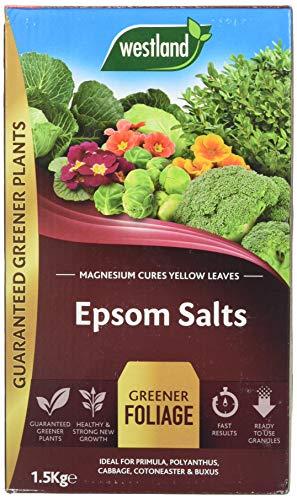 Westland 20600007 1.5 kg Epsom Salts Foliage Greener Fertilizer -...