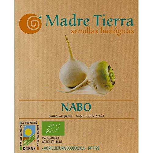 Madre Tierra - Semillas Ecologicas de Nabo -(Brassica Campestris) Origen Lugo- España- Semillas Especiales - 1.5 gramos