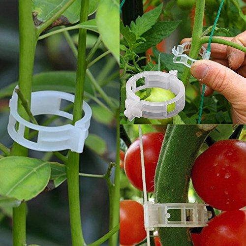 Ruimin Clips de support pour plantes grimpantes et tomates pour faire pousser des plantes droites et rendre les plantes plus saines.