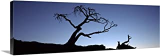 GREATBIGCANVAS Gallery-Wrapped Canvas Entitled Silhouette of a Limber Pine (Pinus flexilis) Tree, Crowsnest Pass, Alberta, Canada by 48