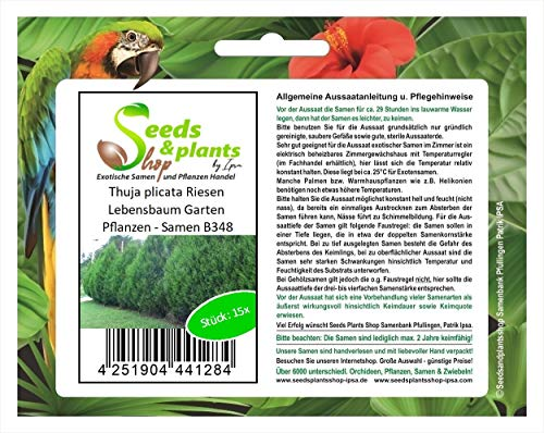 Stk - 15x Thuja plicata Riesen Lebensbaum Garten Pflanzen - Samen B348 - Seeds Plants Shop Samenbank Pfullingen Patrik Ipsa