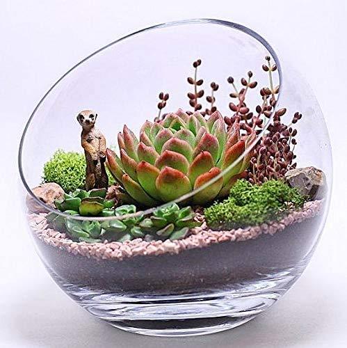 Ecosides - Ciotole in vetro trasparente inclinate per terrario, vaso rotondo a forma di globo largo, in vetro, per contenere caramelle, piante, fiori, frutta (trasparente, 17,8 x 17,8 cm)