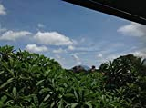 Ginger Tea Honey: a good time in Canggu Bali, while Mt. Agung rumbles in the background (English Edition)