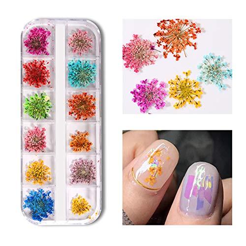 Anself Mixte fleurs séchées nail décoration nail art décoration fleurs de style Vernis à ongles nail art outils de bricolage pour accessoires de beauté - 1 boîte