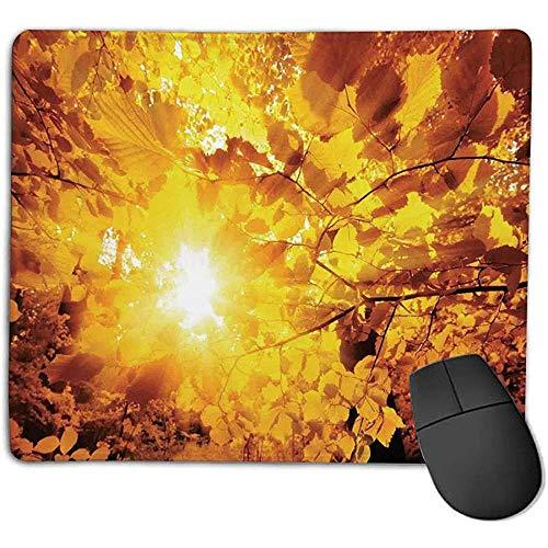 muismat muismat boerderij huis Decor zon door de gouden bladeren van beuken bomen in een bos uitzicht gele operationele expert