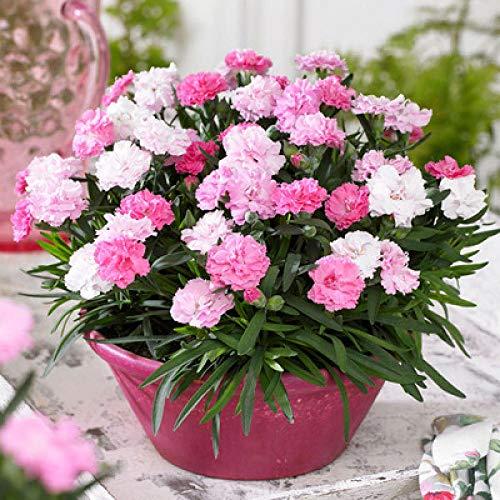 Promworld Blumensamen für Garten...
