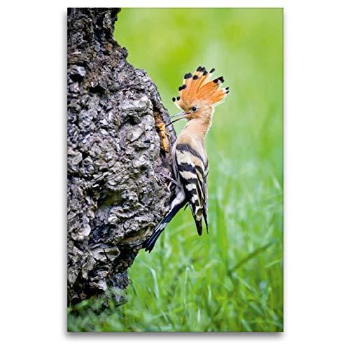 CALVENDO Premium Textil-Leinwand 80 x 120 cm Hoch-Format Wiedehopf (Upupa epops) bringt EIN Grille zum Nest, Leinwanddruck Verlag