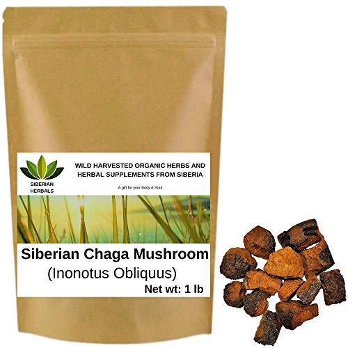 Wild Harvested Organic Siberian Chaga Mushroom Chunks (Inonotus Obliquus) from The Ecologically Clean Shores of Lake Baikal Fresh Harvest Direct from Siberia 454 gm (1 lb)