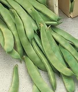Original Italian Prolific Green Romano Flat Pole Bean Seeds