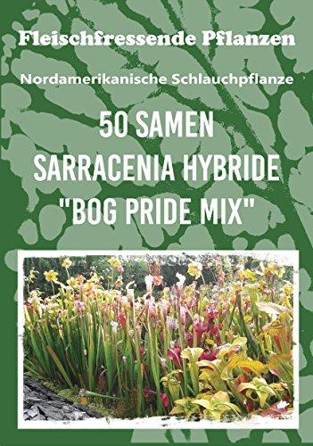 50 frische Samen der außergewöhnlichen Schlauchpflanze - die Sarracenia ist eine beliebte und vielfältige fleischfressende Pflanze für Wohnung und Garten - hochwertiges Saatgut