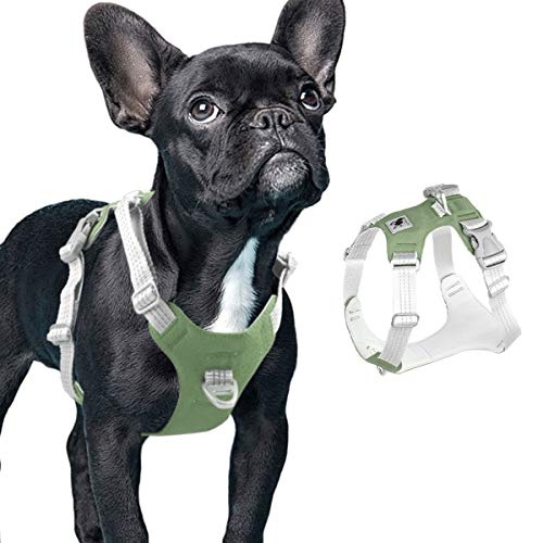 What Is an Easy Walk Harness